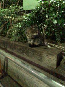 東池袋にある野良猫の聖地【東池袋中央公園】 part2