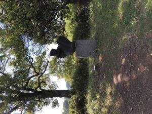 立川にあるクソでか自然マシマシエリア【国営昭和記念公園】 part2