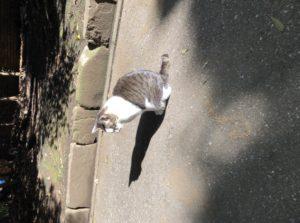 猫うさぎ、現る
